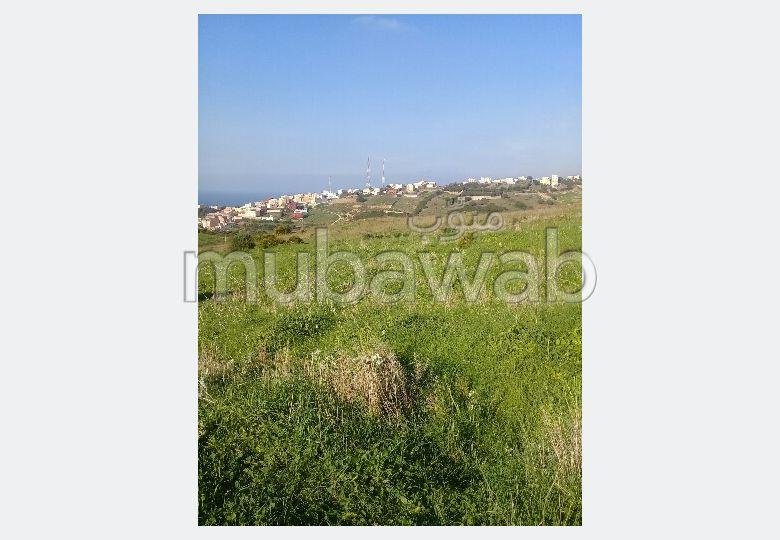 أرض مساحتها 13696م²، الشرف مغوغة