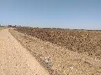 بيع مزرعة بالفضالات. المساحة الإجمالية. 0 م²