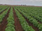 Vente terrain agricole sup 6hectars