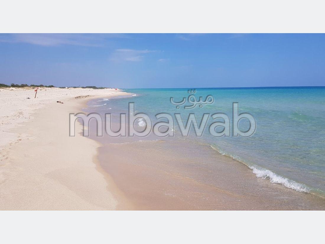 1 Hectare 1ére position à la plage du Tazarka