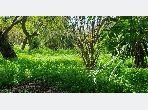 Vente de terrain à Californie. Surface totale 1255 m²