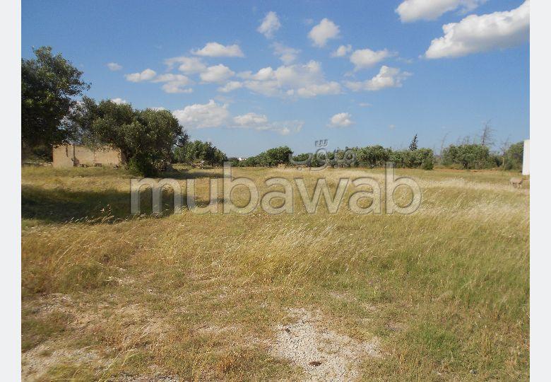 Terrain Ilhem 2 à Sidi Hamed