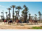 Vente de terrain à la palmeraie de Marrakech
