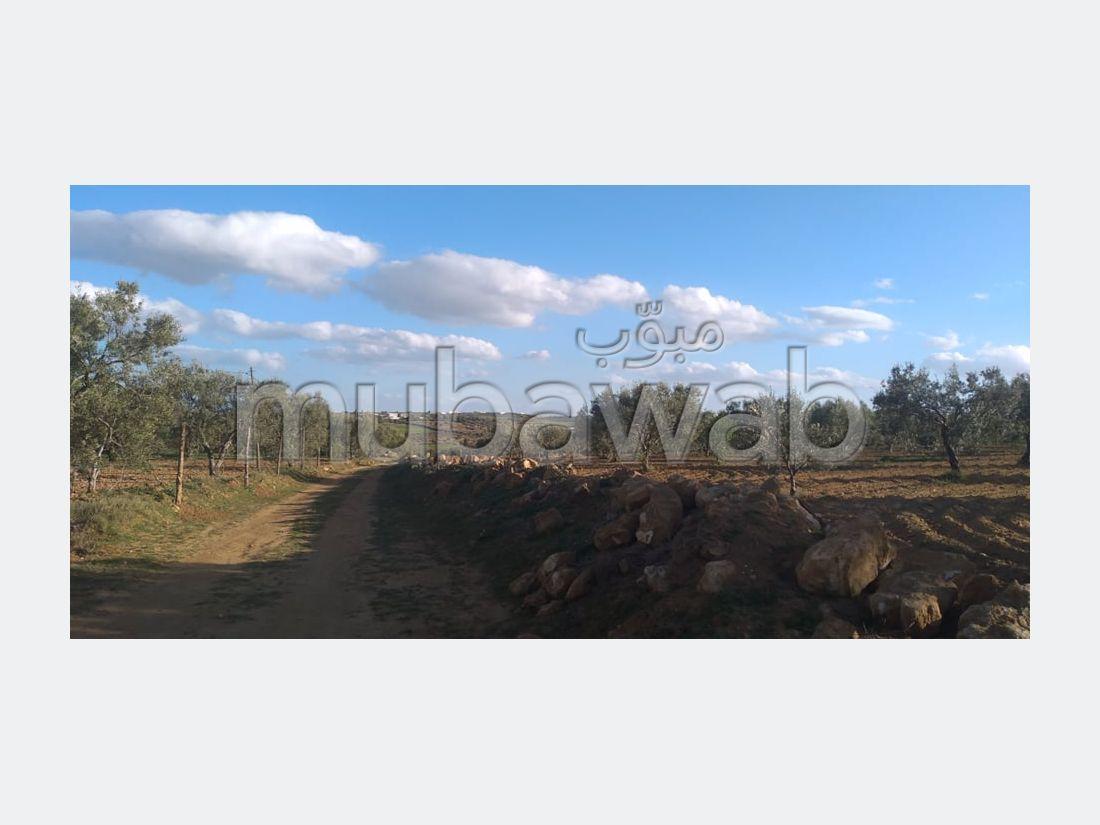 3 hectare sidi jdidi hammamet